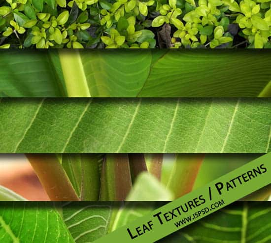 leaf-texture_preview