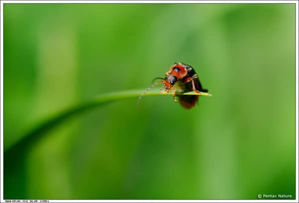 insects macro photography collection