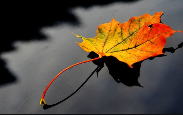 Maple leaf 40 Cool Examples of Still Life Photography