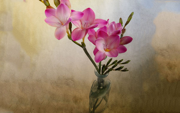 flower 40 Cool Examples of Still Life Photography
