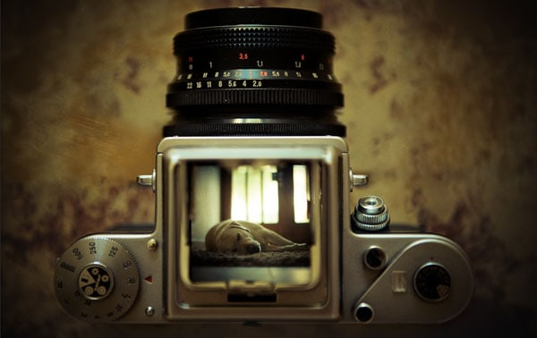 my 40 Cool Examples of Still Life Photography