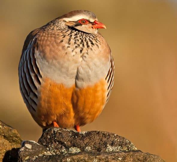 birds_photography
