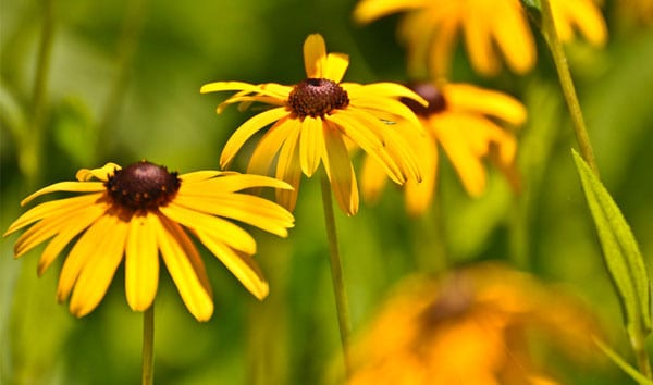Block Island Flowers