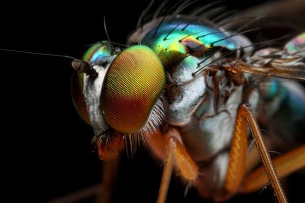 Diptera side view