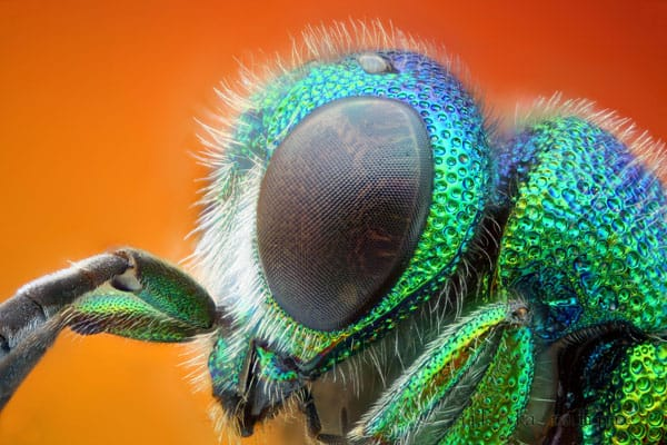 First stack with the Nikon 30+ Insect Macro Photography and Tips