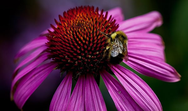Flight of the Bumblebee 50 Beautiful Flowers Photography