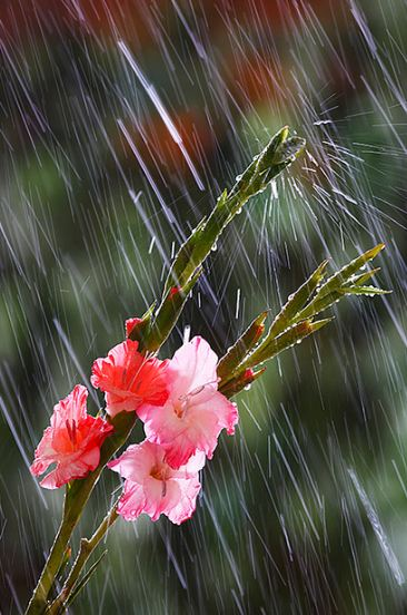 Rain Photography 15 30+ Superb Rain Photography Collections