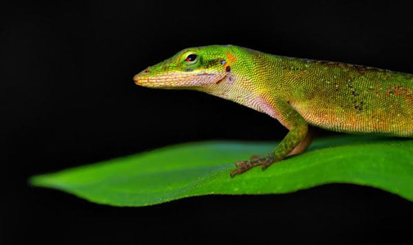 Reptile Photography Collections1 30+ Reptile Photography Collections