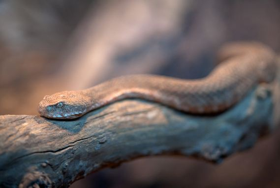 Reptile Photography Collections17 30+ Reptile Photography Collections