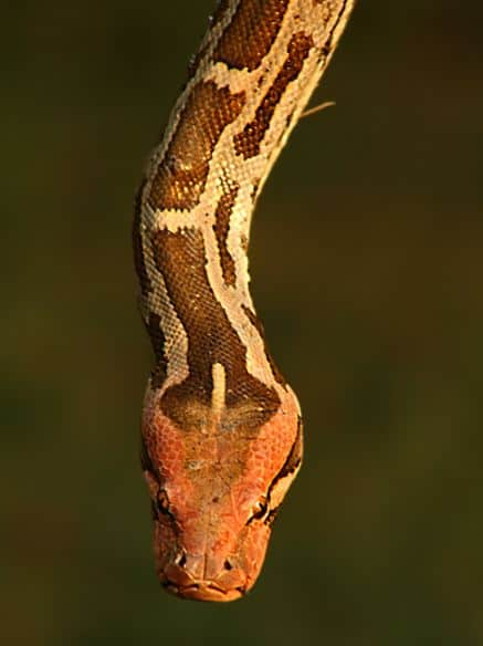 Reptile Photography Collections20 30+ Reptile Photography Collections