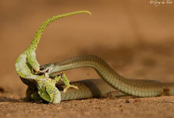Reptile Photography Collections25 30+ Reptile Photography Collections