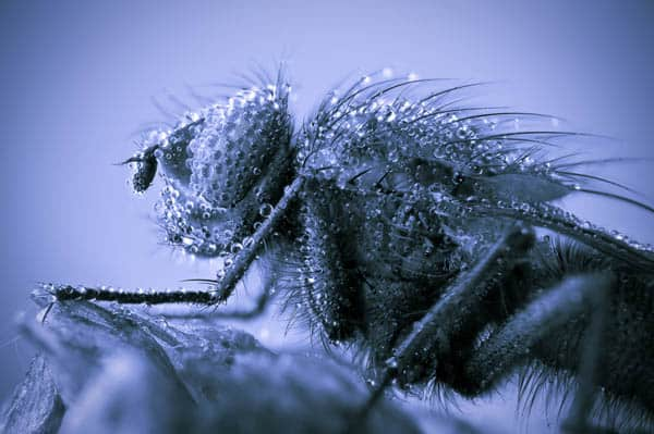 Shivers down my hairy spine 30+ Insect Macro Photography and Tips