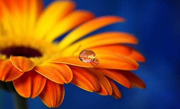 flower macro photography