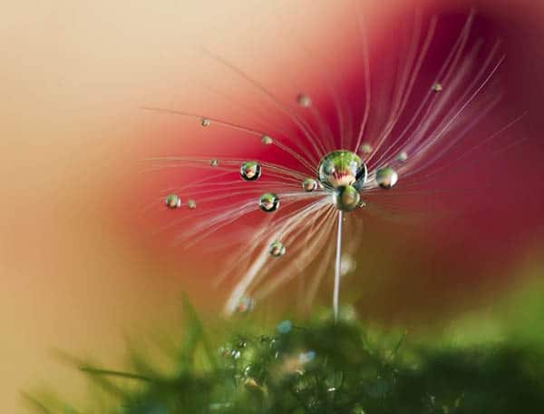 amazing flower photography, Natural flower