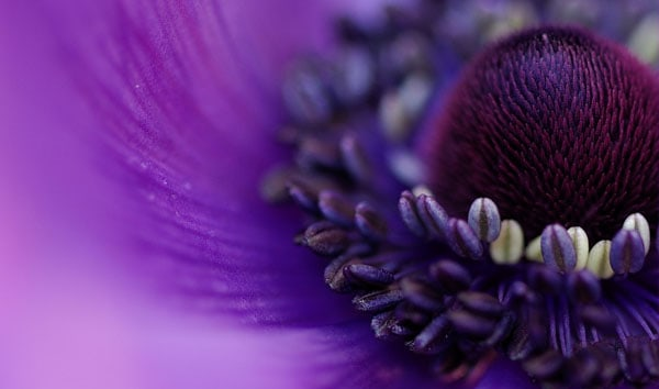 shades of purple 50 Beautiful Flowers Photography