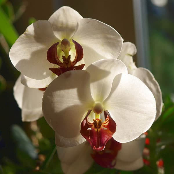 white orchid flowers 50 Beautiful Flowers Photography