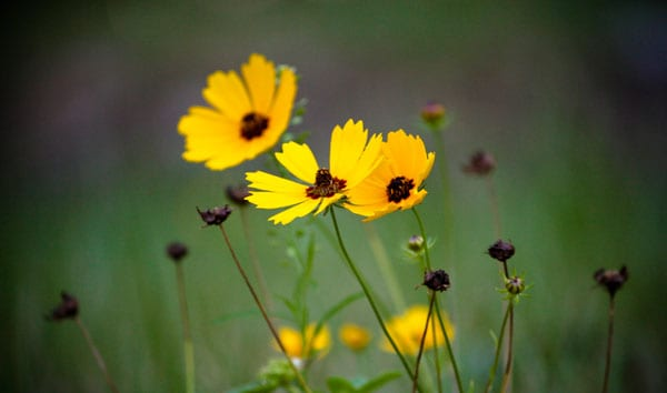 yellow wild flowers 50 Beautiful Flowers Photography