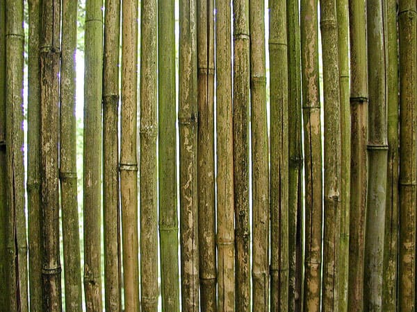 Bamboo 2 50+ Free Bamboo Textures For Photoshop