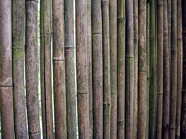 Bamboo 3 50+ Free Bamboo Textures For Photoshop