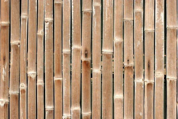 Bamboo Texture