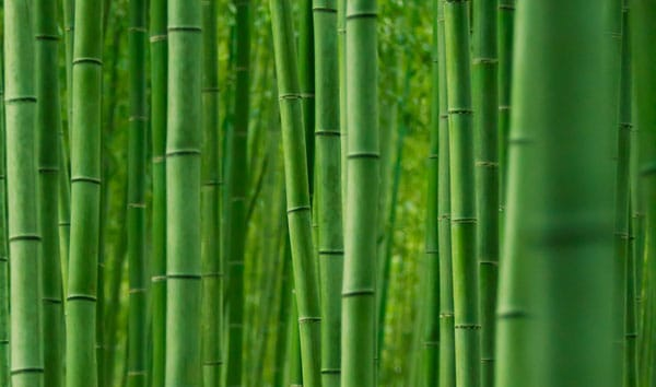 Bamboo forest 50+ Free Bamboo Textures For Photoshop