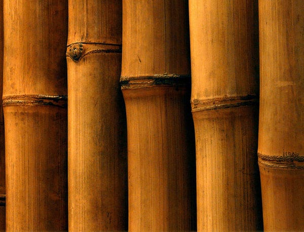 Bambus 50+ Free Bamboo Textures For Photoshop