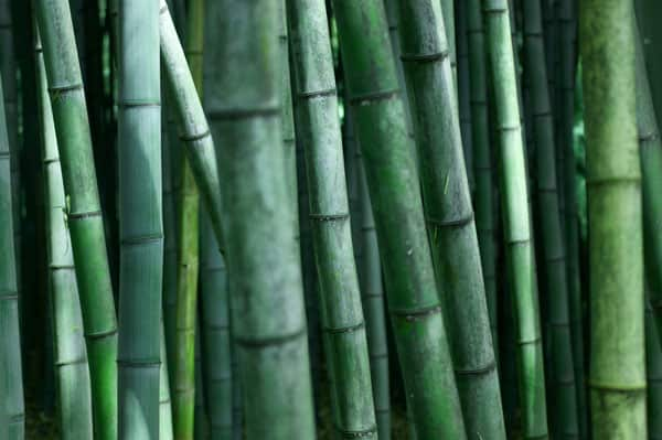 Green Bamboo Life 50+ Free Bamboo Textures For Photoshop