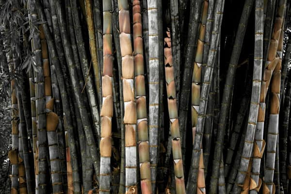 KinG BamBoo 50+ Free Bamboo Textures For Photoshop