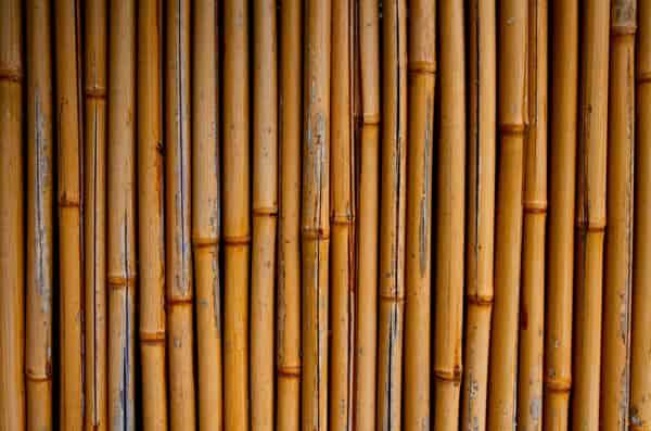 Yellow Bamboo 2