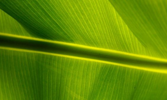 green backgrounds 18 20+ Green Backgrounds Collections