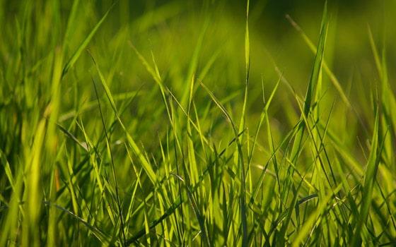 spring-grass-wallpaper