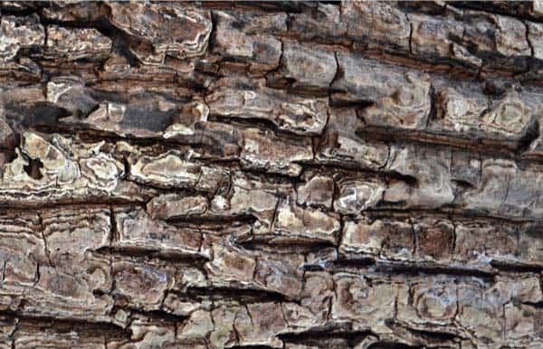 Free wood textures 1 Freebies: Wood Texture
