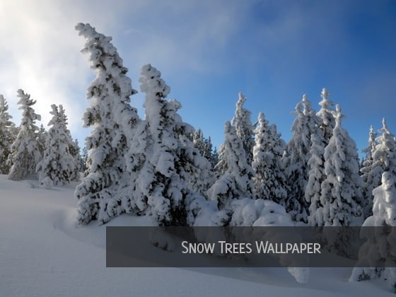 snow trees wallpaper 20 Snow Background Collections