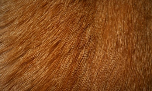 18 cat fur texture 30+ Fur Texture Collections