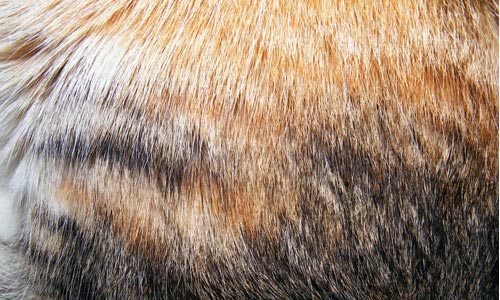 8 Fur Textures 30+ Fur Texture Collections