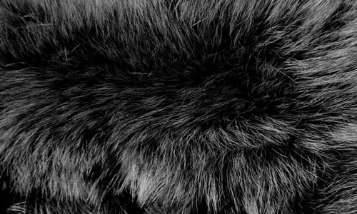 9 Fur Texture 30+ Fur Texture Collections