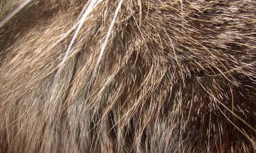 Lynx Fur Texture 30+ Fur Texture Collections