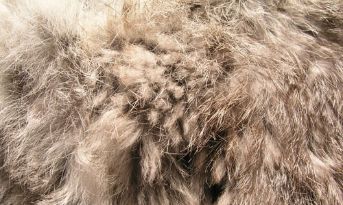 Rabbit Fur 30+ Fur Texture Collections