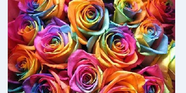 color flowers 25+ Rainbow Background Wallpapers