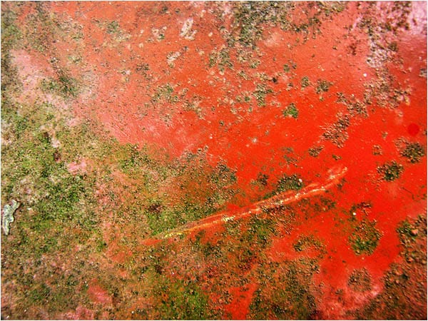 rt25 35 Free High Res Red Rust Textures