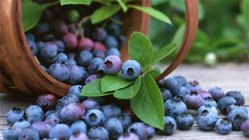 7 BasketwithBlueberries 30+ Examples of Fruit Wallpaper Collections