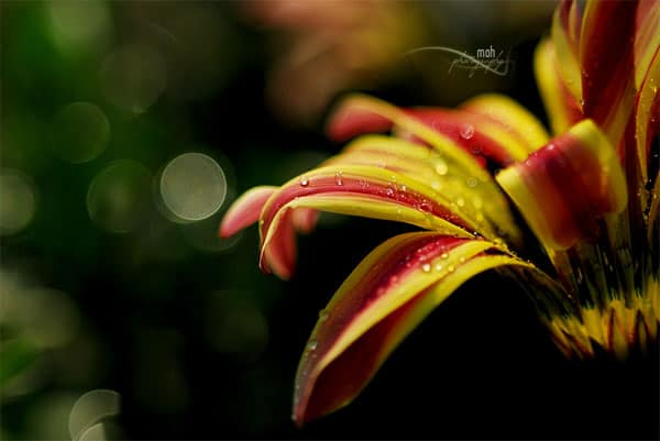 Dew drops 40+ Amazing Bokeh Photography Examples