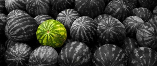 black watermelon 30+ Examples of Fruit Wallpaper Collections
