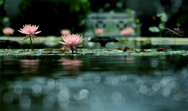 wpid bokeh photography 2 40+ Amazing Bokeh Photography Examples