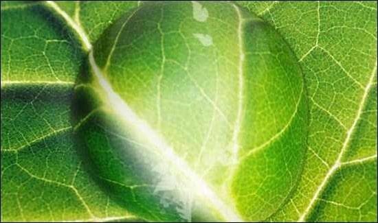 leaf-drop-tutorial