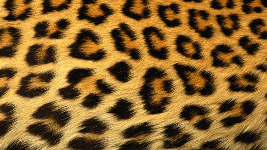 wpid-14-High-Resolution-Animal-Fur-Texture-Thumb01.jpg