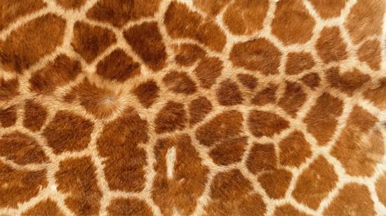 14-High-Resolution-Animal-Fur-Texture-Thumb06