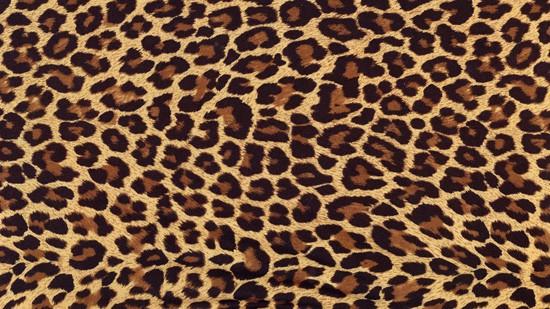 14-High-Resolution-Animal-Fur-Texture-Thumb08