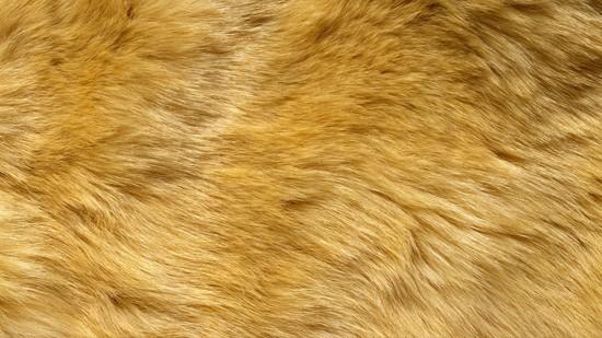 14-High-Resolution-Animal-Fur-Texture-Thumb09