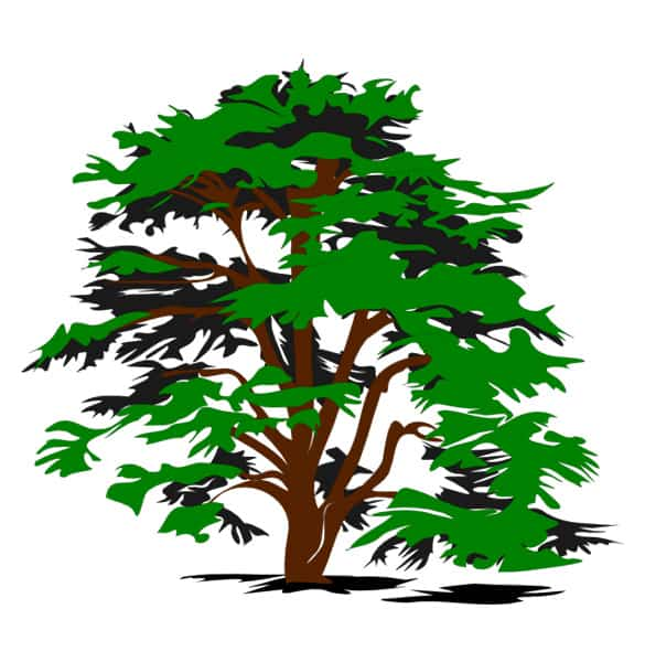 Simple Nature Tree Vector Clipart